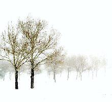Spring Snowstorm by Leanna Lomanski