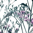 Vernonia by SRowe Art