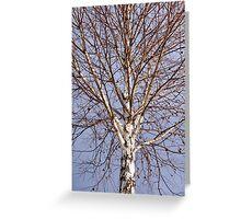 Birch tree against blue sky Greeting Card