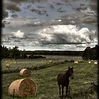 Horse in a Hayfield in Ontario by Wayne King