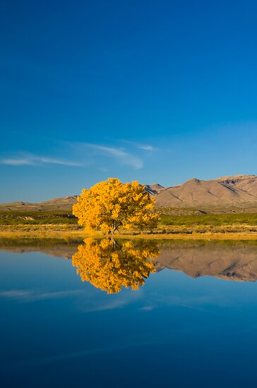 New Mexico. Socorro. Bosque de Apache National Wildlife Refuge. by Alan Copson