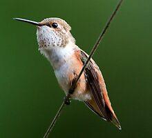 Bird on a Wire by David Friederich