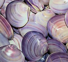 Purple Shells Background by dave1276