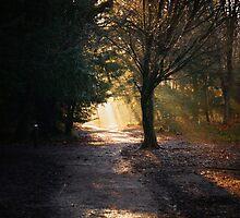 The Sunlit Trail by JNashPhotos