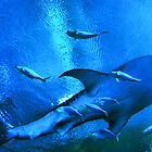 The world of the Whale Shark by trwphotography