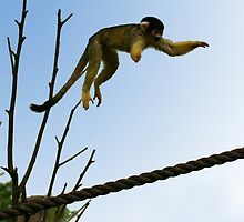 Jumping Squirrel Monkeys! by Sheila Smith