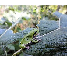I'm hungry!!! - Tree Frog with his/her mouth open waiting for a fly - Nature Photography by Barberelli. Photographic Print