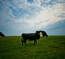 Atom Heart Mother by Nelson  Sosa