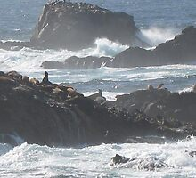 Point Lobos st reserve, Carmel, California by chord0