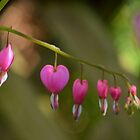 Bleeding hearts by Jean Poulton