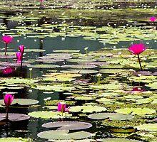 Sigiriya Lotus Lilly pond by darkydoors