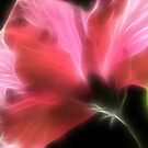 Hibiscus Daydreams II by Lesley Smitheringale