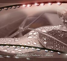 Mother Nature's Tears by Wendy  Slee
