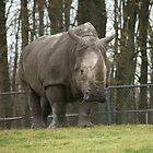 Rhino by Denise Wolff