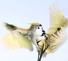 ~Feathered Rivalry~ by a~m .