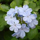Floridian Flower - Blue by CBenson