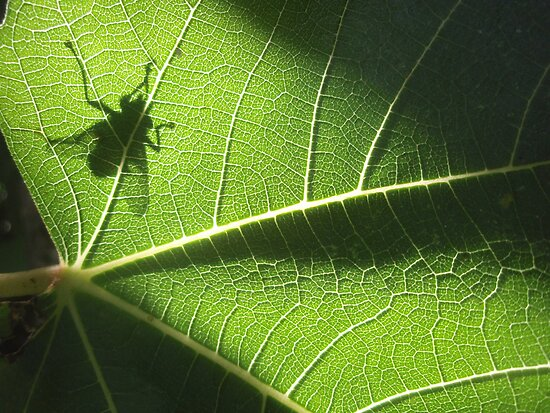green gremlin by yvesrossetti