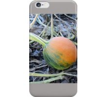 Mini Green and Orange Pumpkin at the Pumpkin Patch Field - Nature Photography by Barberelli  iPhone Case/Skin