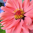 Gorgeous Flower with Detail - Nature Photography by Barberelli by Barberelli