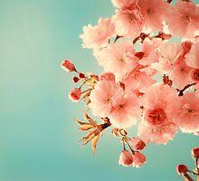 Cherry Cream by StarlingPhotos