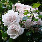 Rose Bouquet by artgoddess
