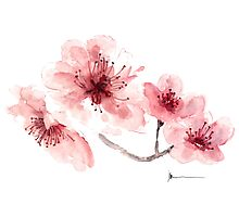 Cherry blossom fragrance watercolor art print painting Photographic Print