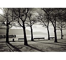 Laketrees in Winter Photographic Print
