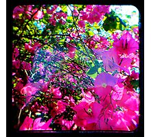 Pink Divine Photographic Print