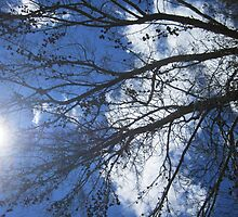Tree overhead by MariaSG