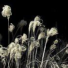 *Weeds Noir* by DeeZ (D L Honeycutt)