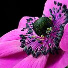 Anemone by SmoothBreeze7