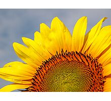 Bring a Little Sunshine Photographic Print
