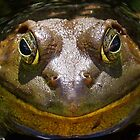 Bullfrog (Head) by main1