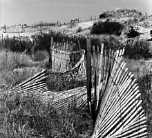 Wondering Dune Fence by CariAnne Slotterback