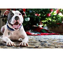 Holiday Joy Photographic Print