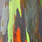 Colorful peeling bark - 2011 by Gwenn Seemel