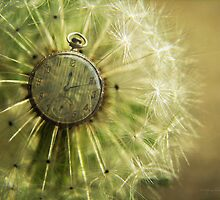 Dandelion Clock by Karen Casey-Smith