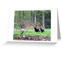 THAT'S BULL Turkeys Greeting Card
