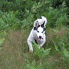 Dog on a mission by Elizabeth Thurston