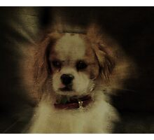 My Dog Rupert Photographic Print