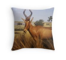 exhibit Throw Pillow
