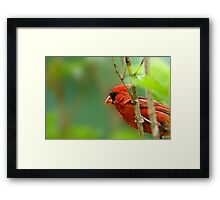 Cardinal Inspired by C.S. Lewis Framed Print
