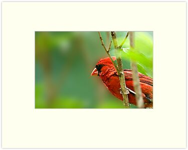 Cardinal Inspired by C.S. Lewis by Bonnie T.  Barry