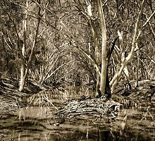Australian river Ghost Gums by FatBurns