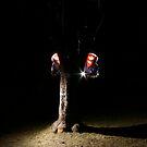 the ninja life by zep wernbacher-dundo