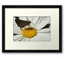 A daisy's offering! Framed Print