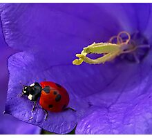 Colorful in the land of ladybirds Photographic Print