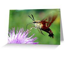 Sweet Tooth  (Hummingbird Moth) Greeting Card