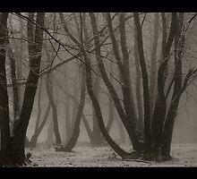 Ferny Creek by Aaron .