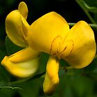 Yellow flower by Frevik